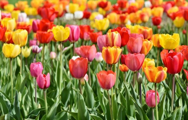 Prezentujemy najlepiej oceniane kwiaciarnie w Jędrzejowie, Sędziszowie i Małogoszczu przez internautów w centrum opinii Googla. Zobacz na kolejnych slajdach miejsca, których klienci są najbardziej zadowoleni.Zobacz >>>>