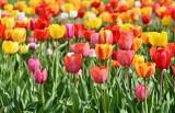 TOP 10. Oto najlepiej oceniane kwiaciarnie w Jędrzejowie, Małogoszczu i Sędziszowie według opinii w Google