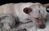 Żywy pies w torbie wyrzucony na śmietnik w Chojnicach [zdjęcia]