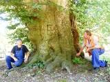Potężne drzewo w Kargowej jest najgrubszym bukiem w Polsce. Teraz może stać się wizytówką gminy [WIDEO, ZDJĘCIA]