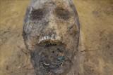 Zbiorowe groby dzieci i czaszka z monetą w ustach. Niezwykłe odkrycie na budowie drogi S19 [FOTO]