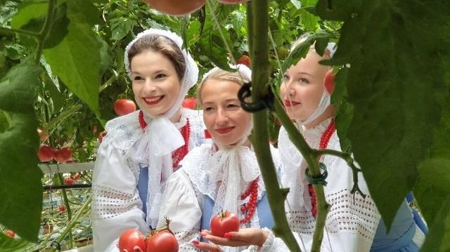 Sesja fotograficzna, w której uczestniczyły tancerki Zespołu Pieśni i Tańca Konin odbyła się w podkaliskich plantacjach pomidorów, a efekty pracy będzie można zobaczyć pod koniec roku.