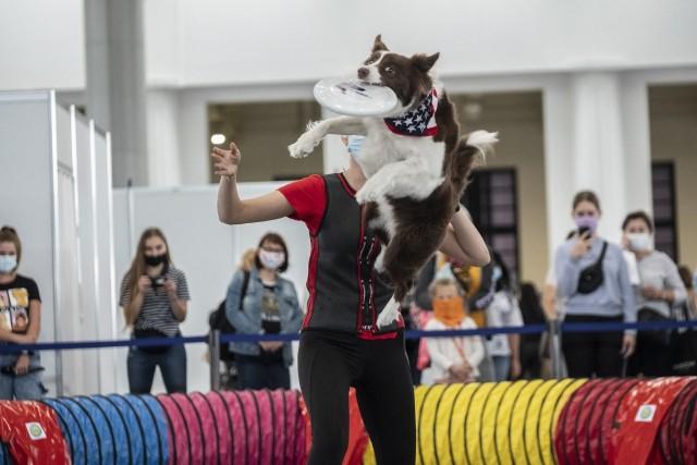 W weekend, 5-6 września, na Międzynarodowych Targach Poznańskich miłośnicy zwierząt mają co oglądać. Wszystko za sprawą targów Animal Fest.