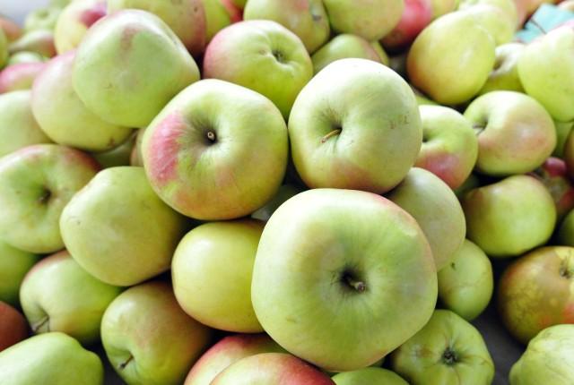 """Wiodącym producentem jabłek na świecie jest Unia Europejska, a Polska jest """"odpowiedzialna"""" za 30 proc. unijnej produkcji"""