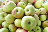 Prawie co trzecie unijne jabłko pochodzi z Polski