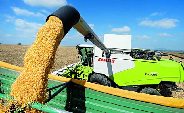 Susza sprawiła, że dynamika eksportu zbóż spadła