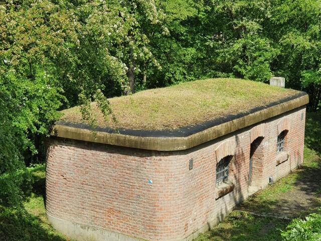 Jedyny zachowany w Twierdzy Przemyśl górski odcinek umocnień fortecznych został oczyszczony z dzikich krzaków, suchych gałęzi, gruzu.