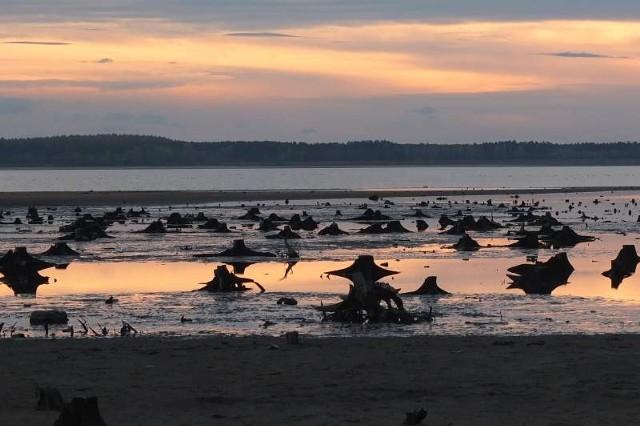Tak wygląda jesienią i zimą Jezioro Turawskie, bo zarządca musi m.in. odsłaniać żerowiska dla ptaków.