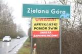 ASF w Lubuskiem. Nareszcie możemy wchodzić do lasów na terenie całego województwa lubuskiego [ZDJĘCIA]