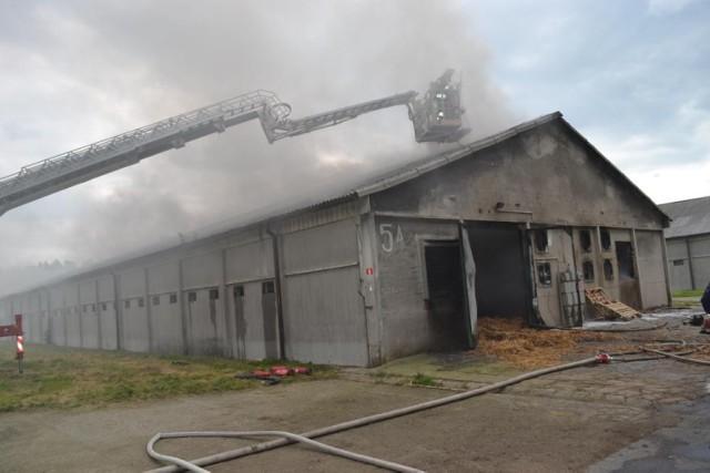 Pożar w Szamocinie. Płonęła ferma drobiu