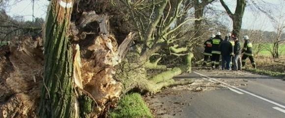 Podczas ubiegłotygodniowej wichury zachodniopomorscy strażacy mieli huk roboty. Najczęściej usuwali z dróg powalone drzewa.