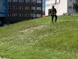Czytelnik: Miasto nie powinno kosić trawy obok pomnika, bo idzie susza. Wiceprezydent: Kosiliśmy na prośbę mieszkańca