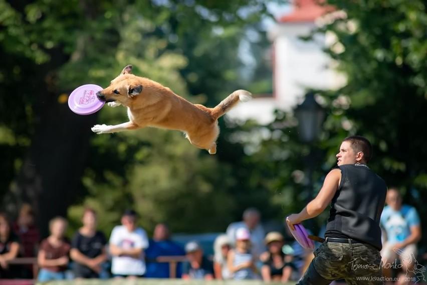 """Zobacz """"Latające Psy"""" w Gdyni - już w ten weekend"""