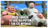 KROWA plus ŚWINIA plus, czyli 500 zł na krowę i 100 zł na świnię. PiS obiecuje rolnikom dopłaty, Internauci tworzą MEMY [18. 4. 2019 r.]