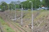 KOSTRZYN NAD ODRĄ. Rzeź drzew przy linii kolejowej Kostrzyn-Barnówko. Kolej tłumaczy dlaczego wycięto setki drzew