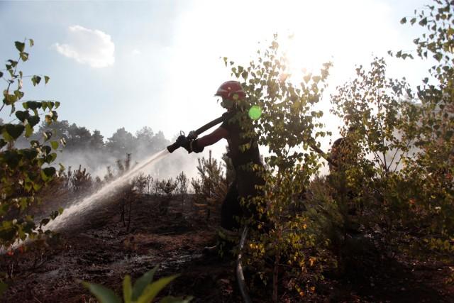 Podpalacz jest coraz bardziej zuchwały! Podpalał lasy, a teraz podkłada ogień w budynkach...