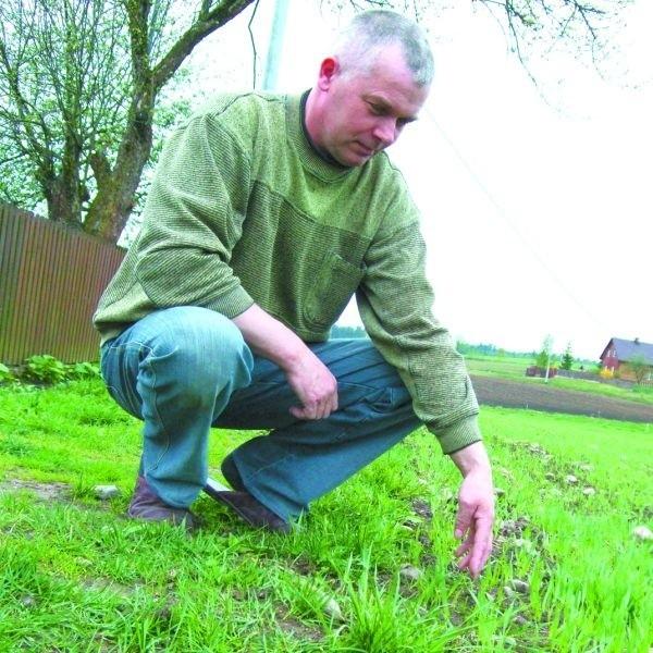 Ryszard Rutkowski z Karczmiska nie zauważył, by po przejściu na ekologiczną formę uprawy ziemi, plony zbóż były niższe