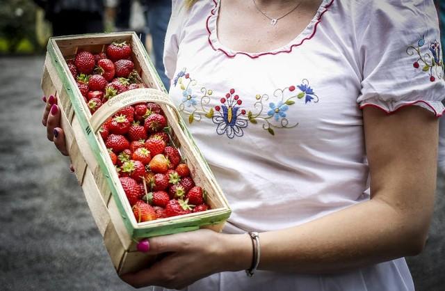 CENY TRUSKAWEKWahają się między 4,50 zł (targowisko w Chełmży) a 10 zł (Chełmno), wynika z raportu Kujawsko-Pomorskiego Ośrodka Doradztwa Rolniczego w Minikowie. W Inowrocławiu kg tych owoców kosztuje przeciętnie 5 zł, o złotówkę droższe są w Skrwilnie (powiat rypiński). Targowiska w Golubiu-Dobrzyniu i w Grudziądzu: 8 zł.Średnia cena truskawek w regionie (czerwiec 2021) - 7,74 zł za kg