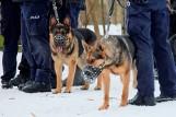 Łódzkie. W szeregach policji pełni służbę ponad 50 psów. Są to owczarki niemieckie i belgijskie. Są niezastąpione 27.02.21