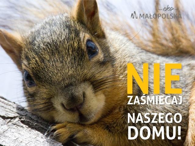 """Podczas tegorocznej edycji kampanii """"Nie zaśmiecaj naszego domu"""" jej ambasadorami są wiewiórka, ryś i wydra"""