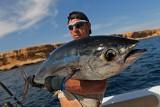 Mają ponad metr długości! - o łowieniu tuńczyków w Morzu Czerwonym