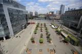 Katowice usuną wszystkie drzewa na rynku i 3 Maja. Dopiero potem posadzą nowe, bardziej odporne. Koszt operacji to ćwierć miliona