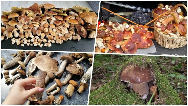 Poprosiliśmy Naszych Czytelników o podesłanie zdjęć z grzybobrania. Efekt niesamowity! Na Podkarpaciu trwa prawdziwy wysyp grzybów. Zobaczcie sami, jakie grzyby znaleźli Czytelnicy Nowin.Bardzo dziękujemy za wszystkie nadesłane fotografie.