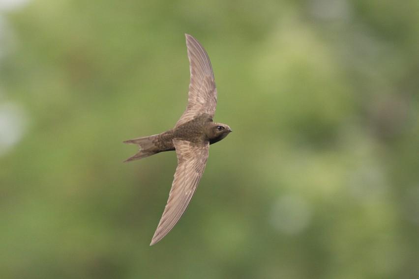 3. Pułapki i… ptaki...