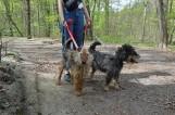 Psiaki z gdyńskiego Ciapkowa czekają na dom. Oto Max, Księciunio oraz Fala