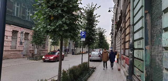 Drzewa na ul. Gdańskiej straciły trochę swój geometryczny wygląd.