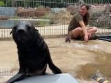 Nowy mieszkaniec wrocławskiego zoo ma już imię. Poznajcie kotika afrykańskiego, Bruna