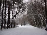 Kierowcy, uwaga na śnieżyce! Wypadek na krajowej dziesiątce pod Bydgoszczą