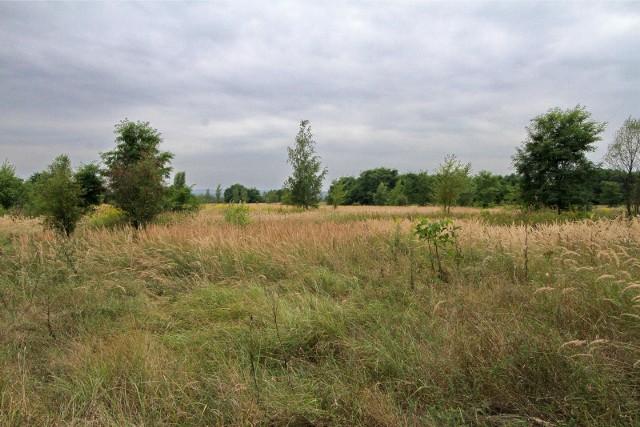 Mieszkańcy i radni zabiegają o to, by na terenie Białych Mórz w rejonie ul. Podmokłej i Herberta nie powstało pole golfowe tylko ogólnodostępny park.
