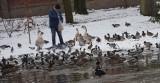 Park pałacowy w Pszczynie zimą 2021. Warto się wybrać. Zobaczcie zdjęcia