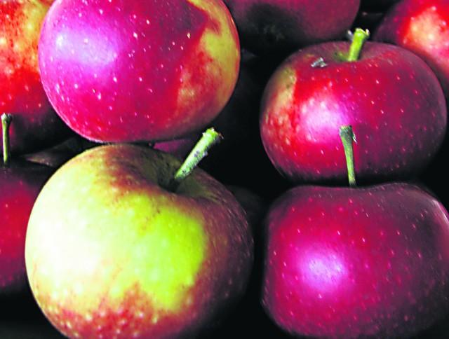 Rolnictwo. Rekompensat nie wystarczy dla wszystkichProducenci jabłek mają problem - bo ich zbiór nie jest opłacalny, a i unijne rekompensaty nie rozwiązują tej sprawy