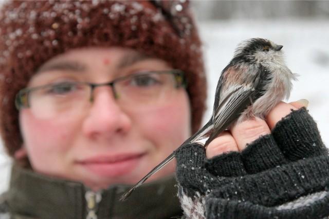 Ptakoliczenie w województwie łódzkim