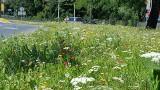 Kraków upiększą łąki z kwiatami. Ozdobią ulice i wyłapią pyły