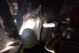 Koń topił się w bagnie. Próbował ratować go właściciel, przyjechali strażacy z linami i łódką (ZDJĘCIA)