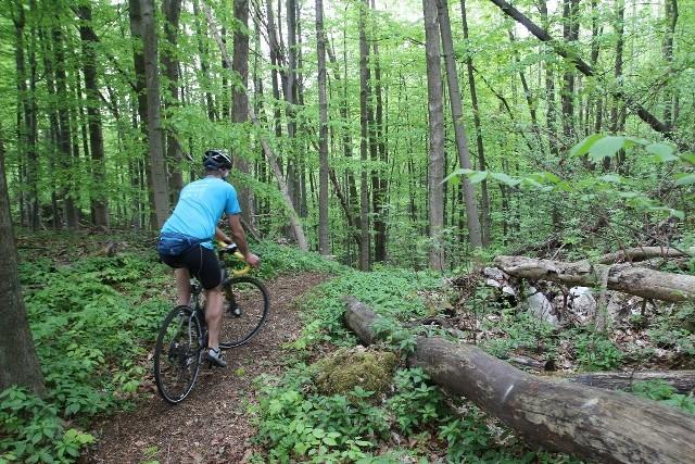 Rezerwat przyrody Góra Stołowa im. Ryszarda Malika to ciekawe miejsce m.in. na weekendowe wyjazdy za miasto Zobacz kolejne zdjęcia/plansze. Przesuwaj zdjęcia w prawo - naciśnij strzałkę lub przycisk NASTĘPNE
