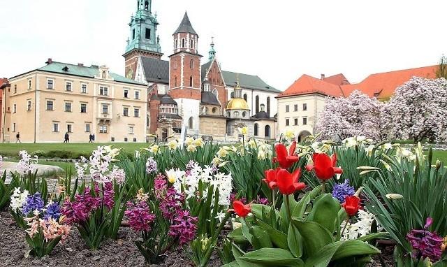 Miejsca w Krakowie, które najładniej wyglądają wiosną. Idealnie nadają się na wiosenny spacer [ZDJĘCIA]