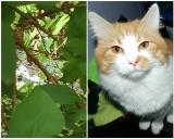 Świebodzin. Kot na działce wpadł w pułapkę na gryzonie. Nie wiadomo, czy inne zaginione futrzaki też nie spotkał taki los