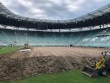 Malowanie trawy na Stadionie Wrocław? Niekiedy się zdarza, szczególnie zimą [ROZMOWA]