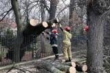 Silny wiatr nad Wielkopolską - strażacy interweniowali 70 razy. W Słupcy drzewo przygniotło 16-latka