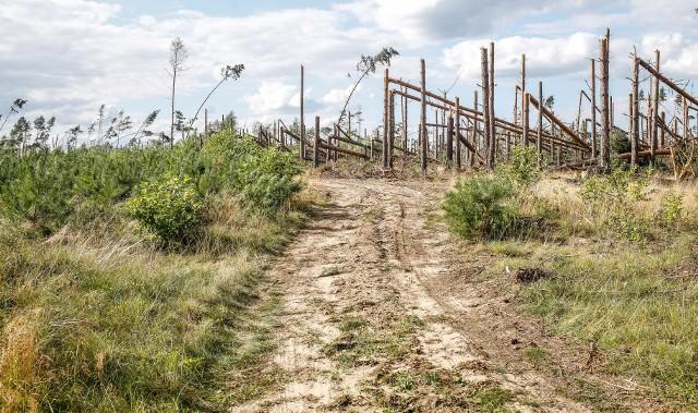 Droga Lotyń - Suszek. Zobaczcie ogrom zniszczeń!