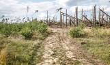 Skutki nawałnicy na Pomorzu 11/12.08.2017: Droga Lotyń - Suszek [zdjęcia]
