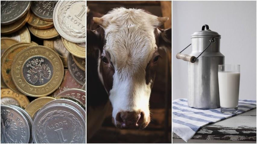 Ceny masła w blokach wciąż wysokie. Co ze skupem mleka? Prognozy na marzec 2018