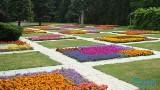 Kwiatowe ogrody w Poznaniu zachwycają. Zobacz zdjęcia i wybierz się na spacer po Cytadeli!