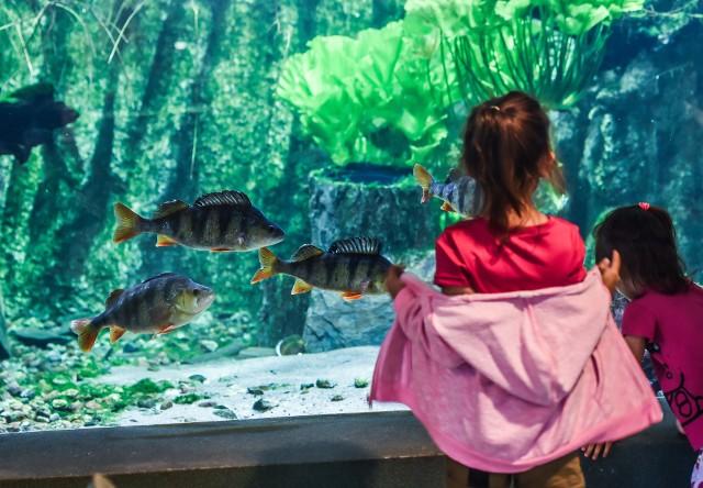 Jedną z atrakcji LPKiW w Myślęcinku, którą można odwiedzić zimą jest Akwarium Terrarium, gdzie znajduje się liczna kolekcja  gadów, płazów i ryb.