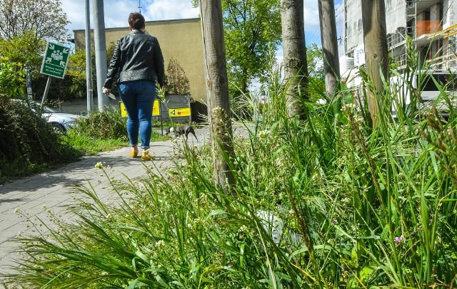 Wysokie trawniki zatrzymują więcej wody - ta w mieście jest szczególnie potrzebna.