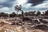 Brazylia: wycinka lasów i sprzedaż ziem rdzennych mieszkańców. Bolsonaro korzysta z okazji?